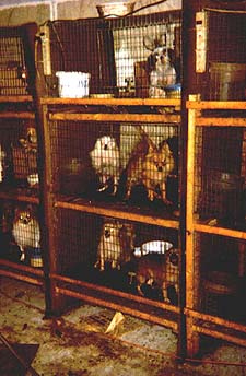 Stacks of Puppy Cages at Mill