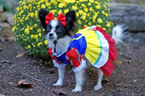 Dog in a Dress Costume
